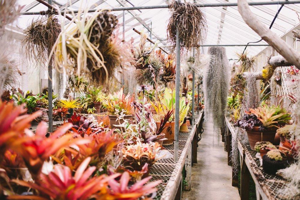 Shelldance Orchid Gardens Pacifica Wedding