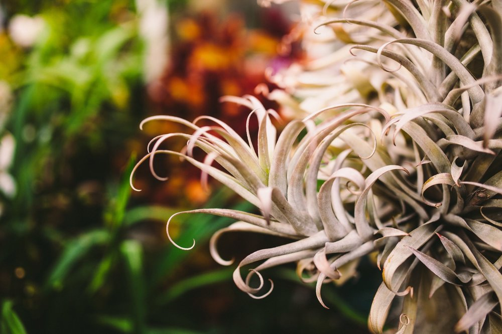 Shelldance Orchid Gardens Engagement Session Pacifica Photography-20.jpg