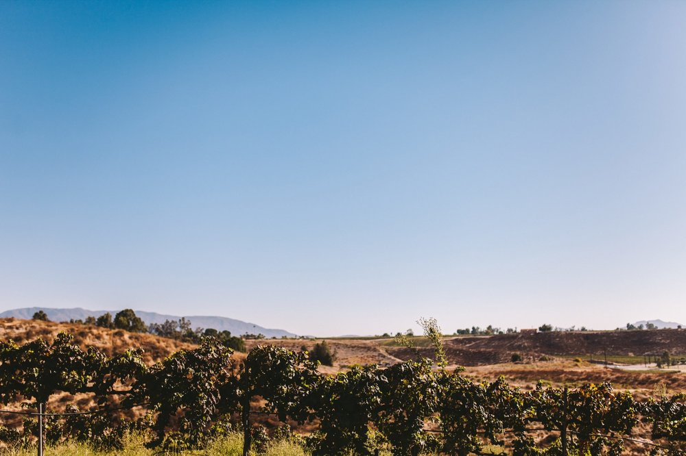 Falkner Winery Temecula Wedding Photography 42.jpg