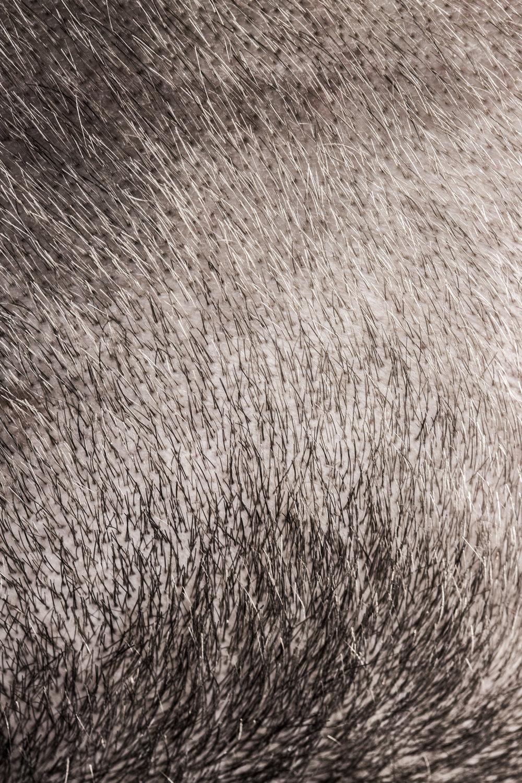 Hair-13.jpg