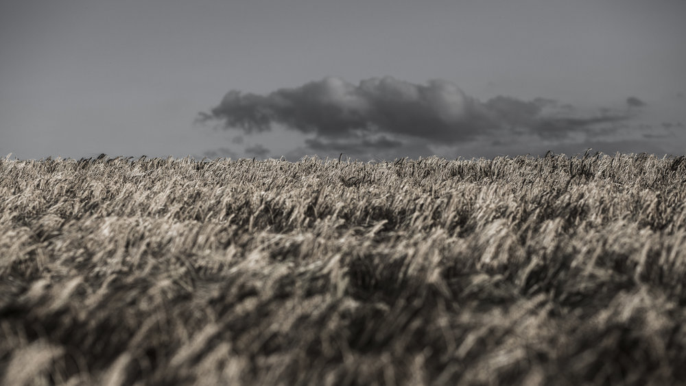 AgriculturalLandscape-2.jpg