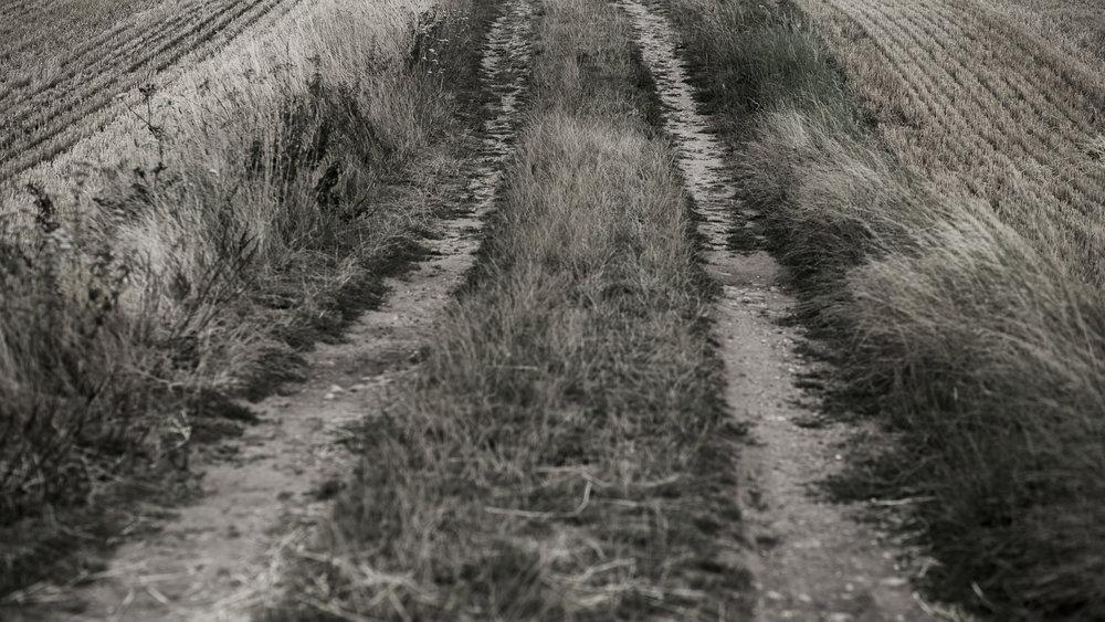 AgriculturalLandscape-6.jpg
