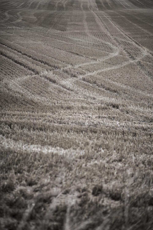 AgriculturalLandscape-5.jpg