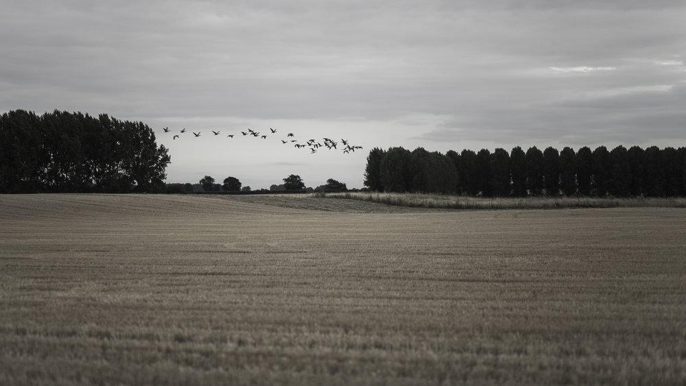 AgriculturalLandscape-8.jpg