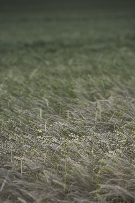 AgriculturalLandscape.jpg