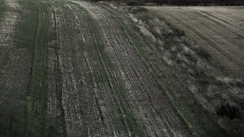 AgriculturalLandscape-18.jpg