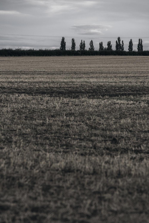 AgriculturalLandscape-12.jpg