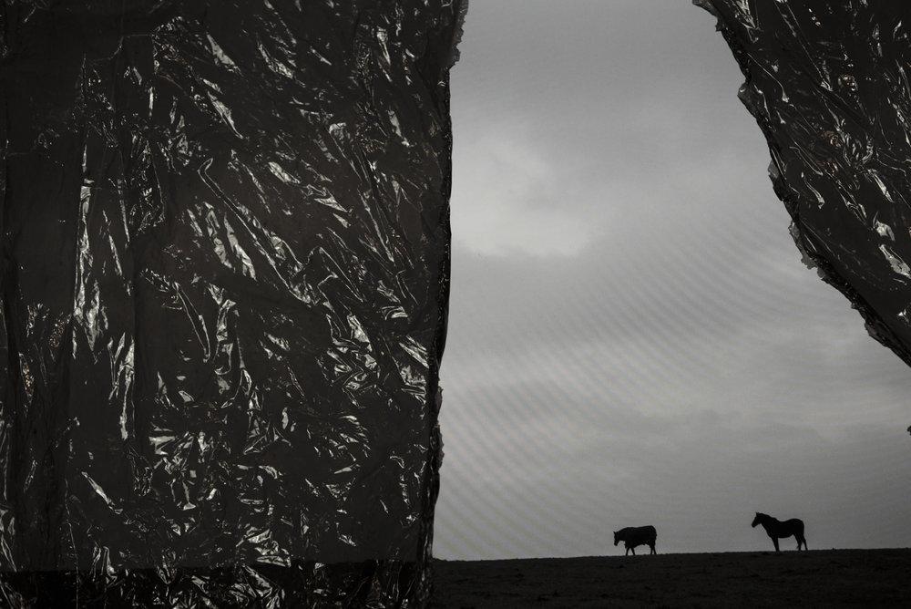 RitaRodner-BlackMeadow-3.jpg