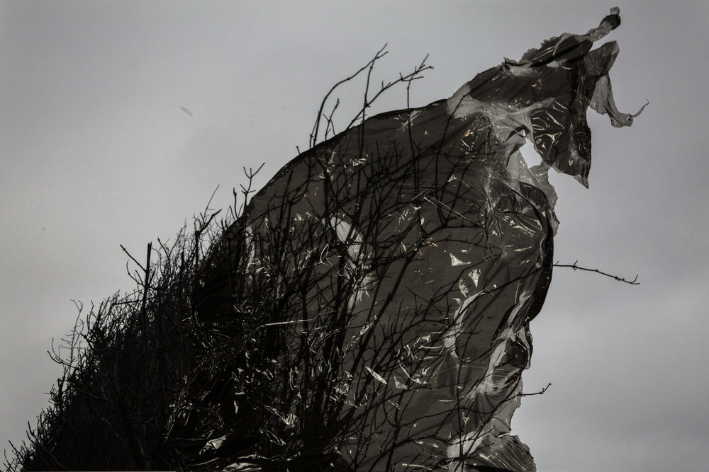 RitaRodner-BlackMeadow-4.jpg