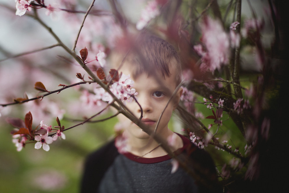 boy looks directly at the camera through a cherry blossom tree