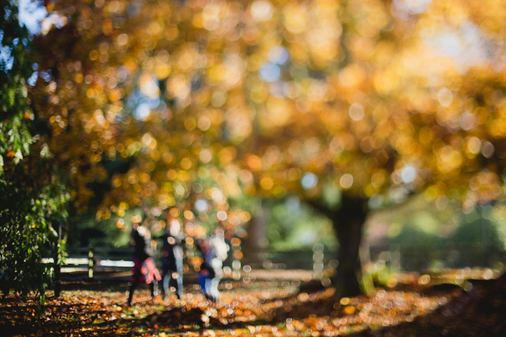 freelensed-family-playing-in-golden-fall-leaves