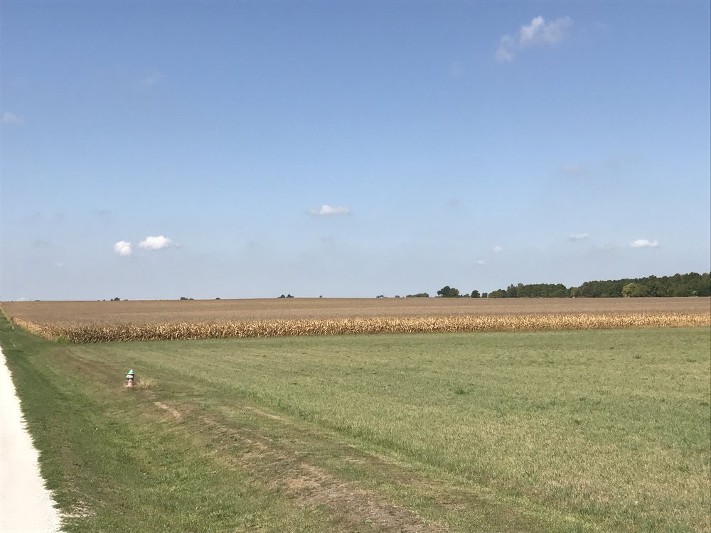 The South Tract (starting with the corn) from the corner of West St. and Blue Mound Rd. looking west.