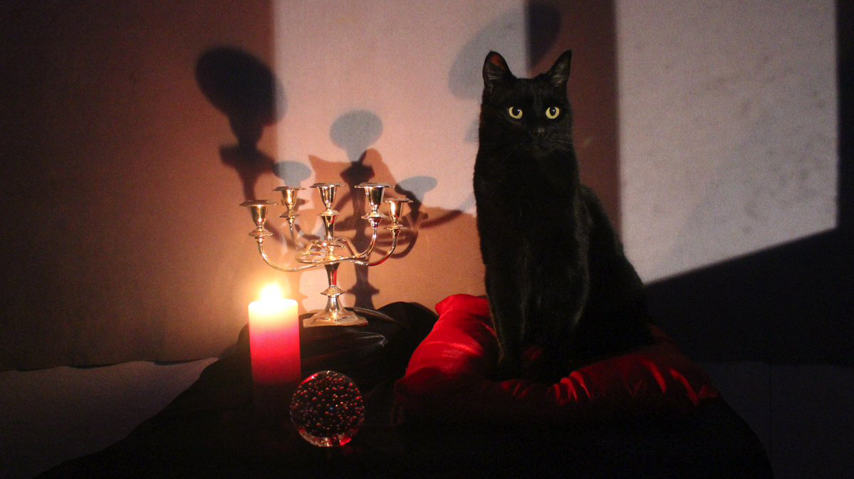 Netflix Petition: Bring Salem the cat to Salem MA to help