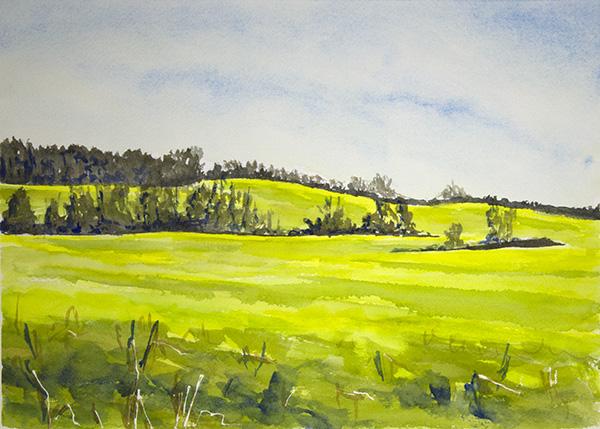Butterweed Fields #1
