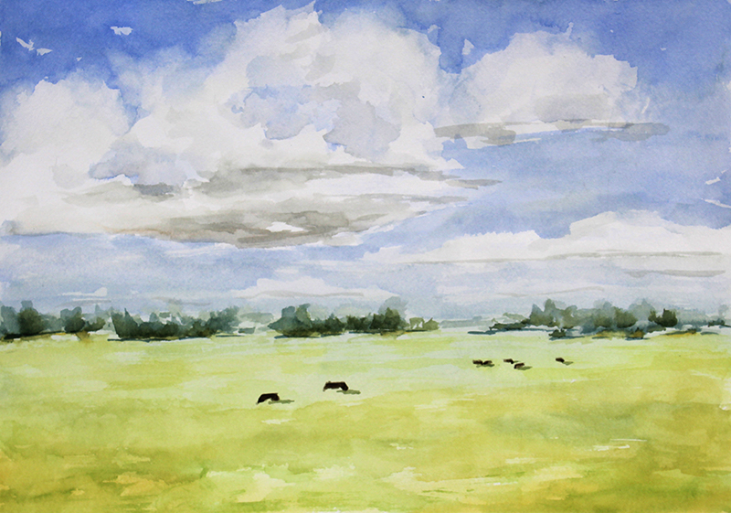 Cows Grazing, July
