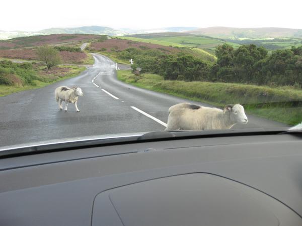road goats.jpg