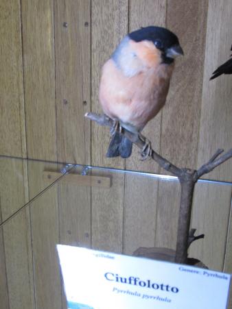 Casentino bird.jpg