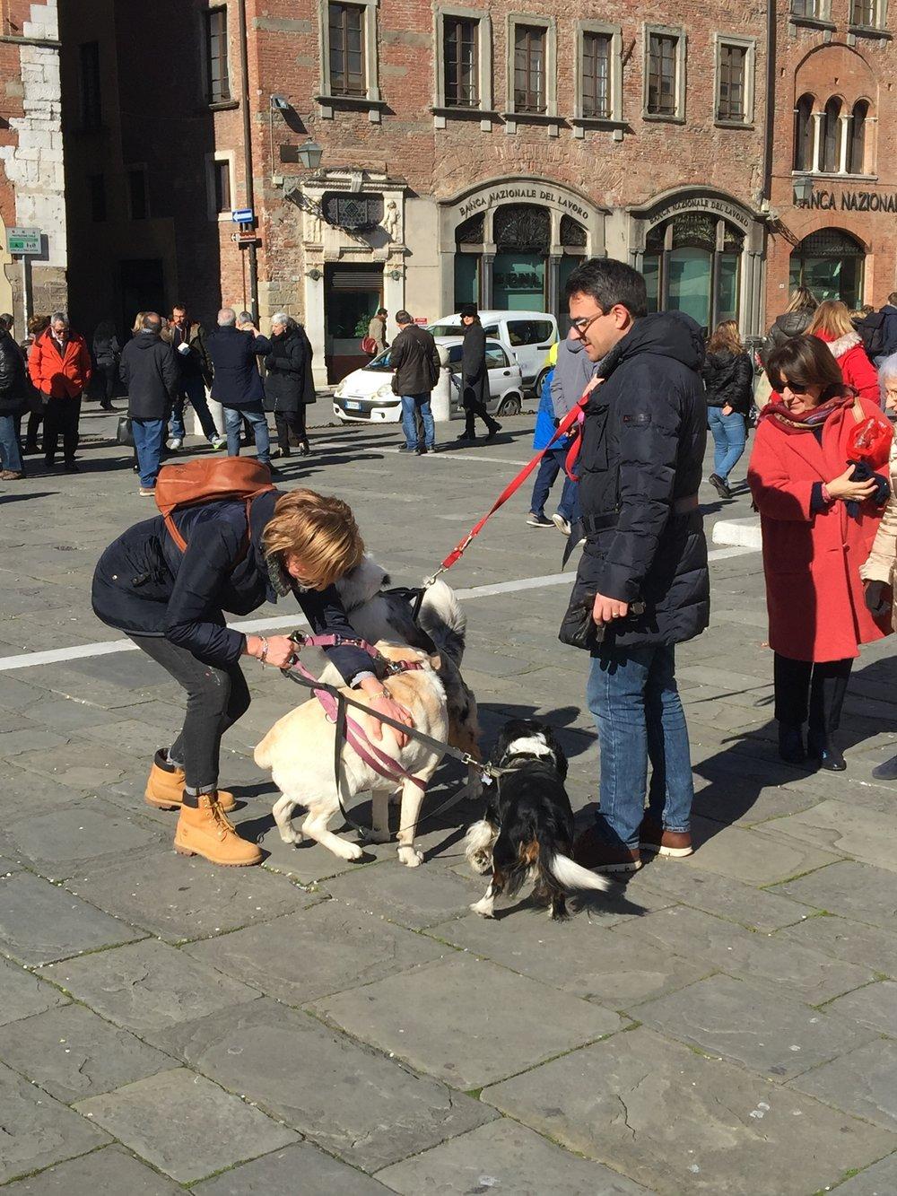 San Michele dogs.jpg