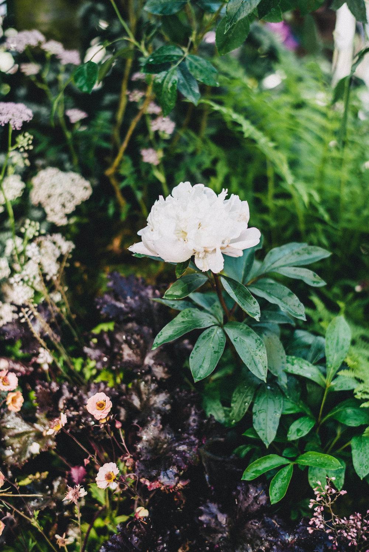 Chelsea Flower Show 8.jpg