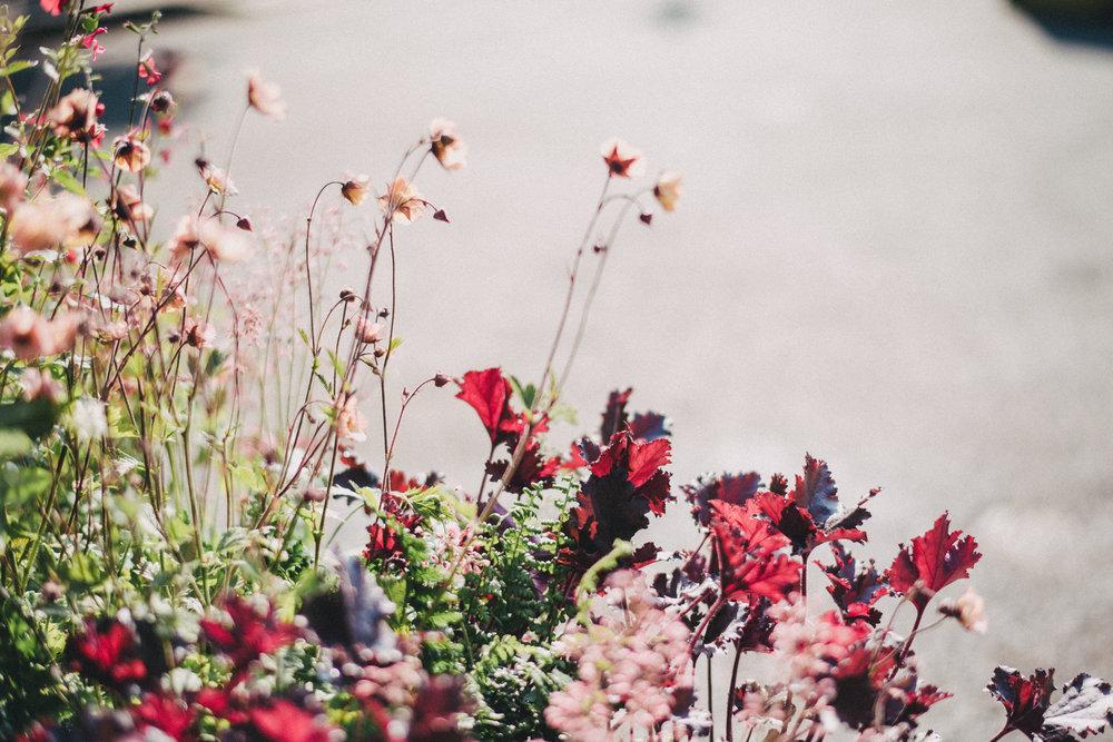 Chelsea Flower Show 11.jpg