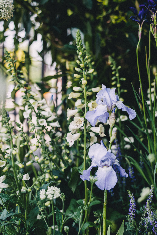 Chelsea Flower Show 67.jpg