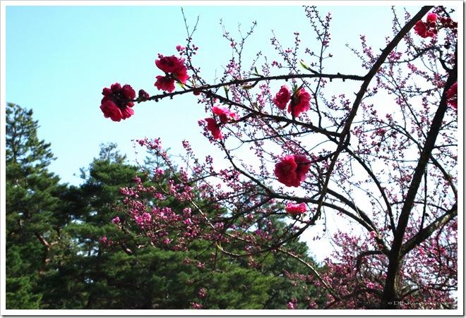 Blue blossom sky sml