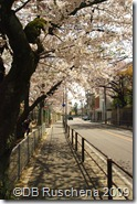 Our street in Spring 6