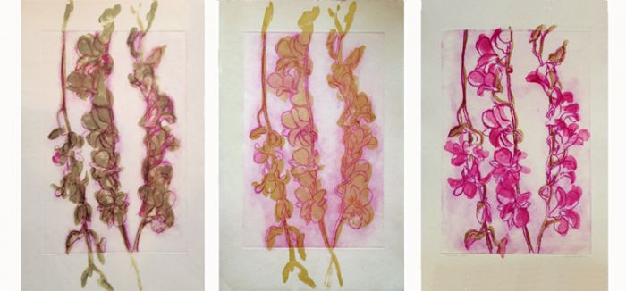 """Dendrobium Orchid Series II"""