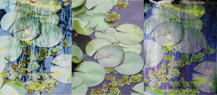 """""""LilyPad Triptych,"""""""