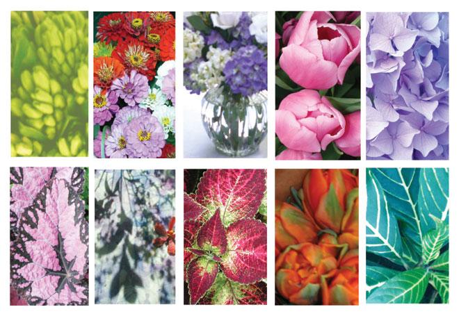 Flora Inspirations
