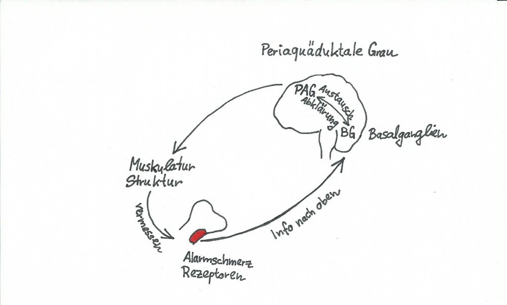 BLOG Bild Schmerzerklärungs Modell.jpg