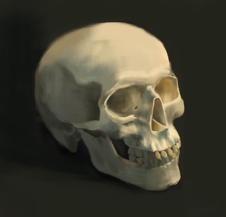 "Skull Study, Digital Painting, 11 x 17"" 2015."