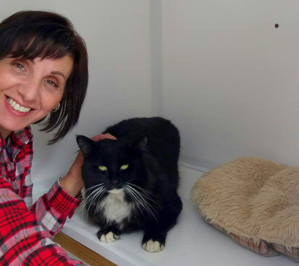 catcuddles-volunteer-black-cat.jpg