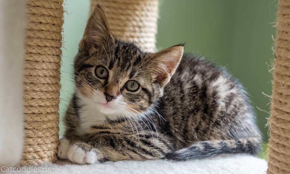 Cats and cats: a selection of articles