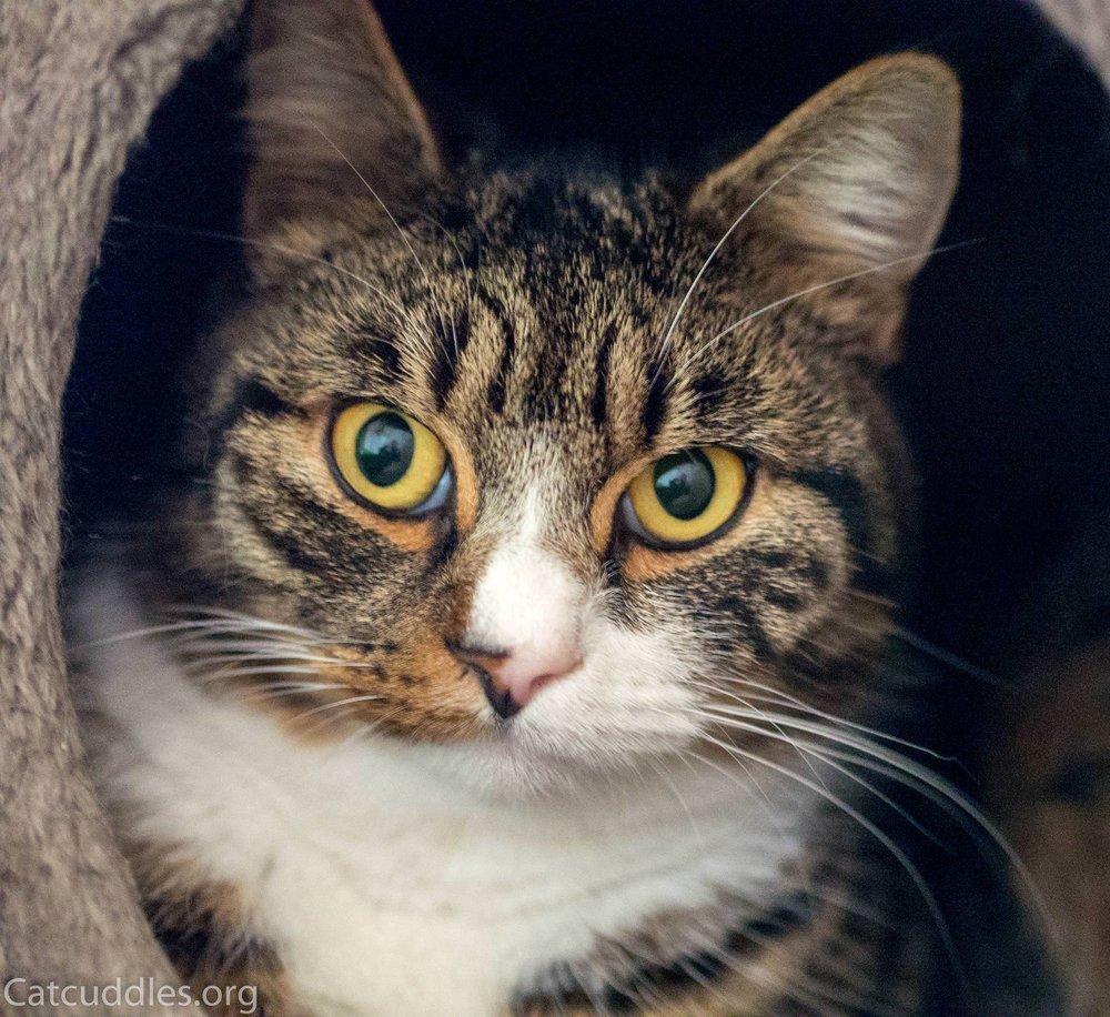 Adopting a mature cat advice