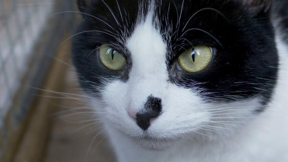 Arya fb 2 cat.jpg