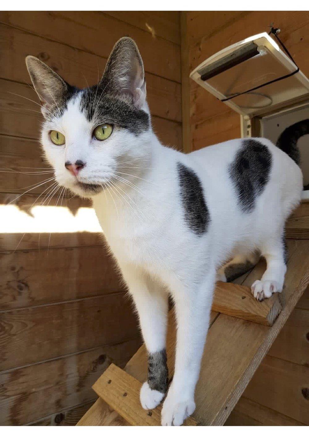 Cassius new 1 cat.jpg