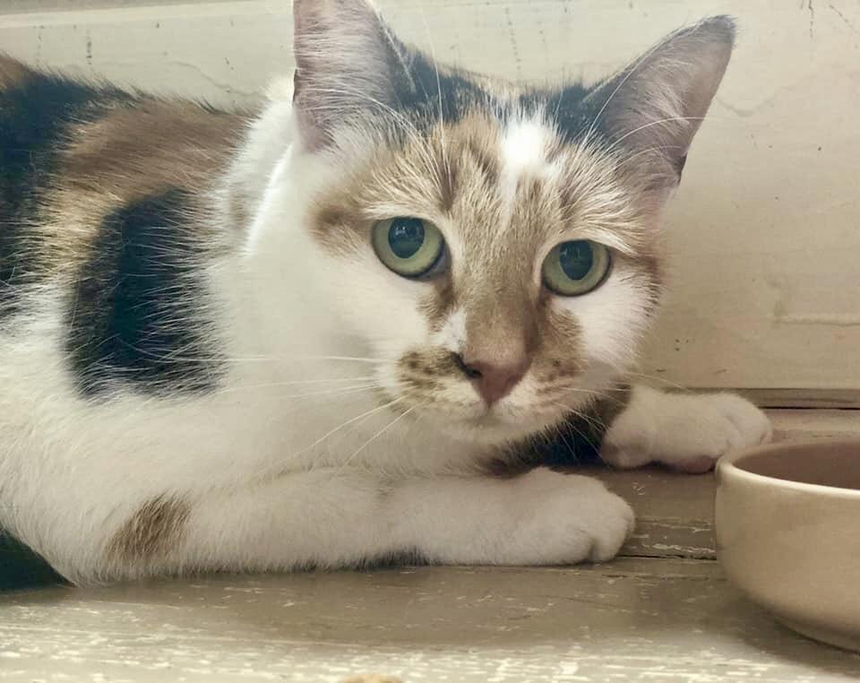Lucy 2 cat.jpg
