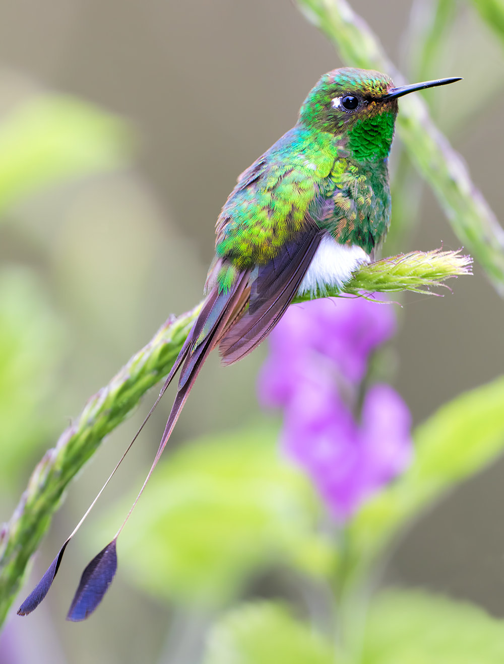 booted-racket-tail-351.jpg
