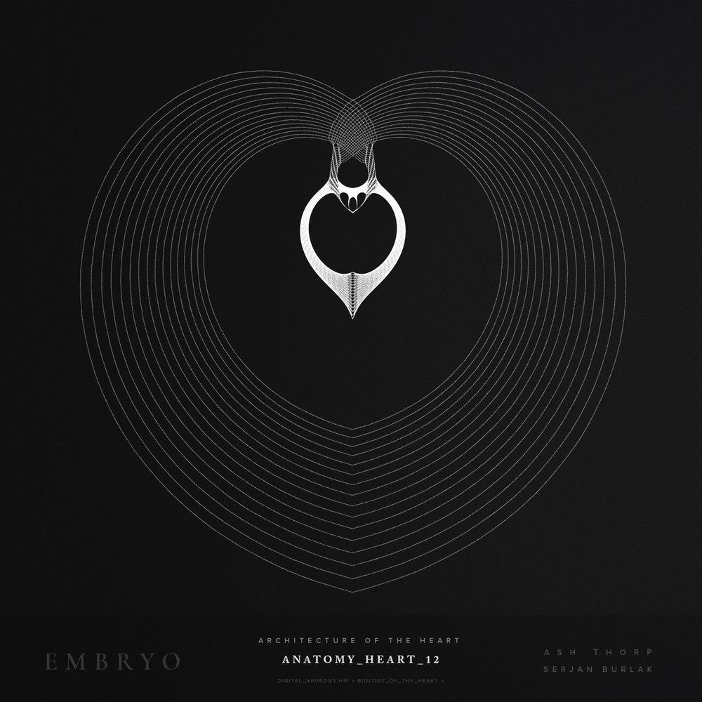 Anatomy_Heart_12-Serjan_Burlak-Ash_Thorp.jpg