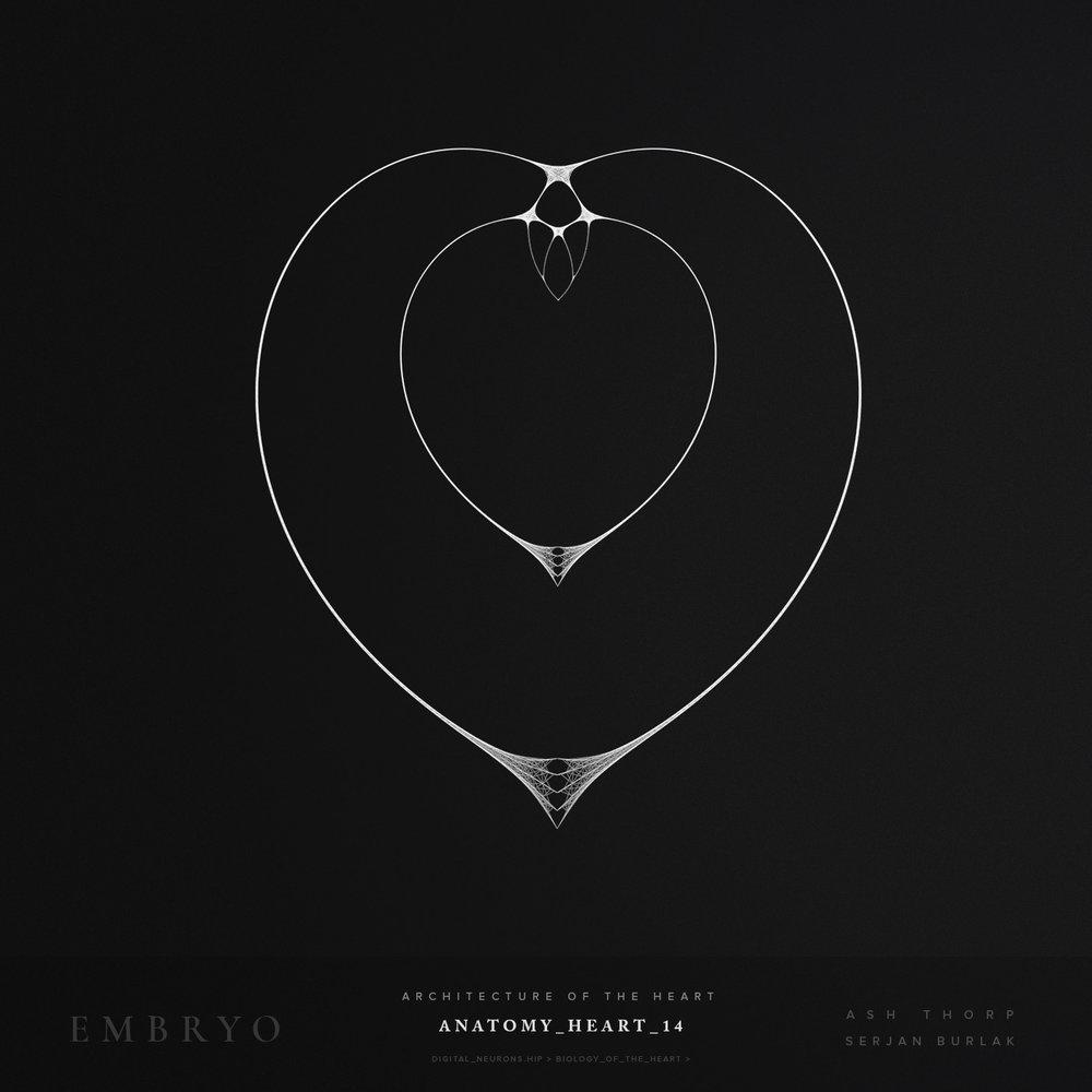 Anatomy_Heart_14-Serjan_Burlak-Ash_Thorp.jpg