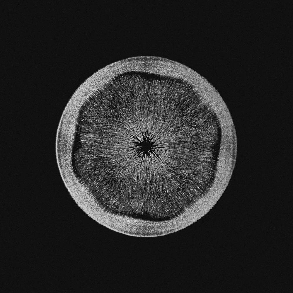 Serjan-Burlak-Houdini-Cymatics_9.jpg