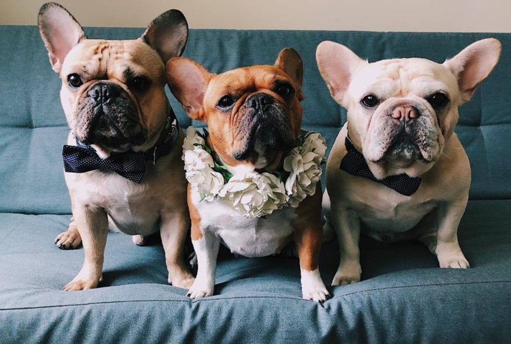Meet Meg's Pups - Lou, Maggie + Goose
