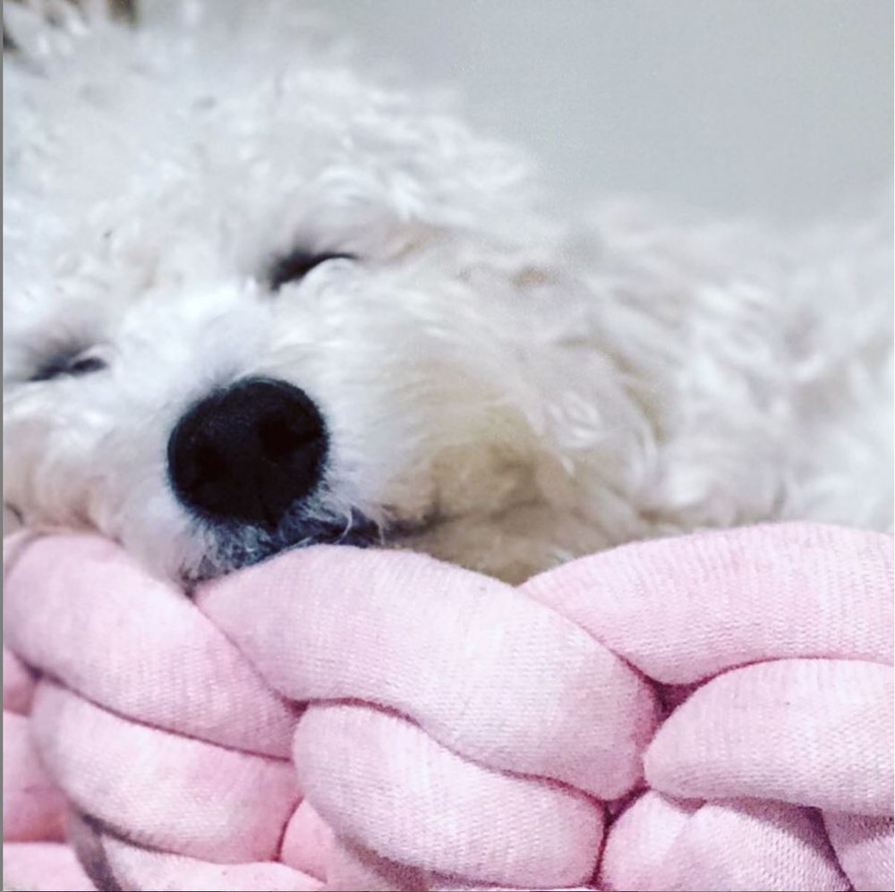 pink bed.JPG