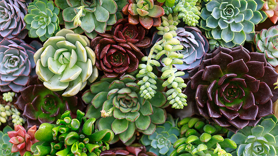 succulents-guide-feat.jpg