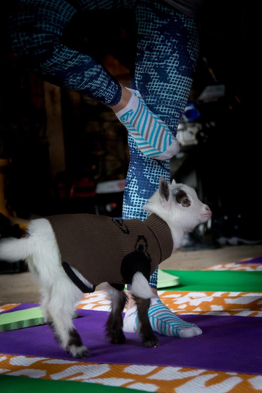Goat_Yoga_Lisa_Nichols_Photos-0745.jpg