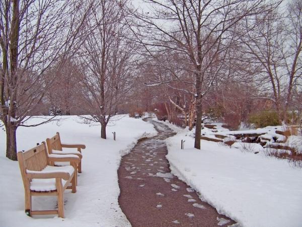 sidewalk_bench_snow_ice_winter_trees-1258868.jpg