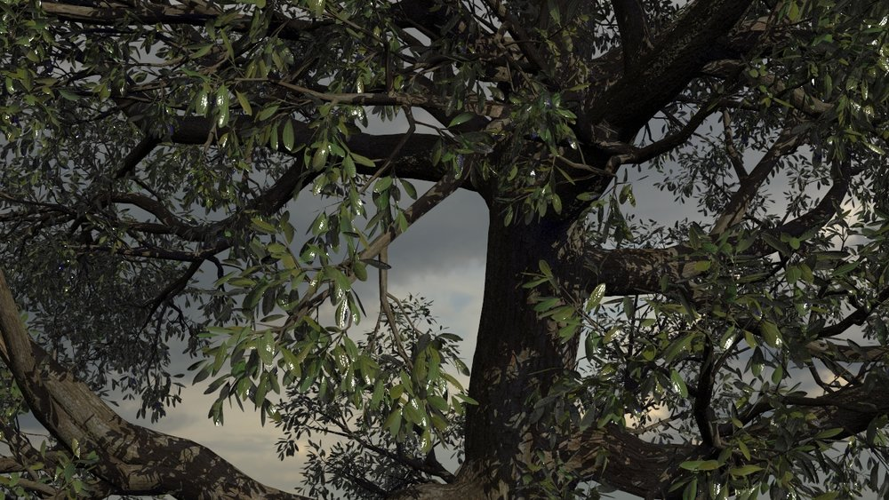 Speedtree in Houdini with Mantra