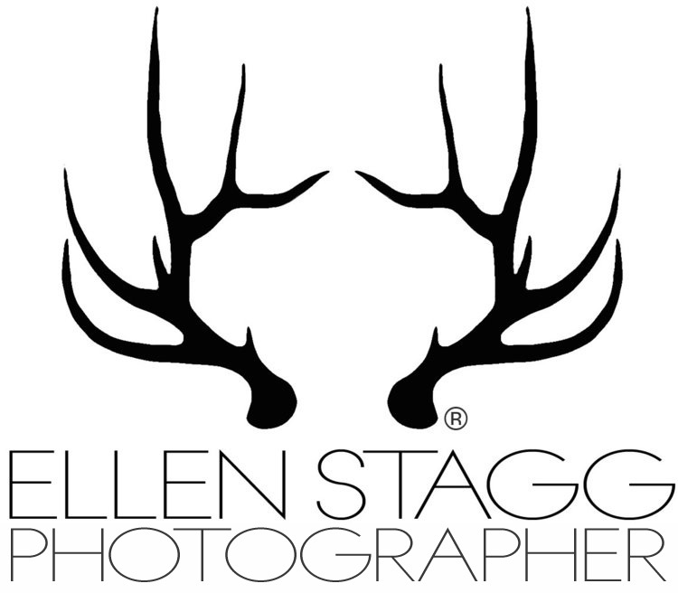 Ellen Stagg Photography