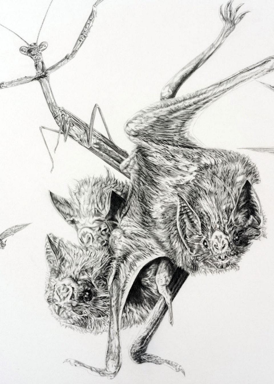 Pad Owl Bats Mantis